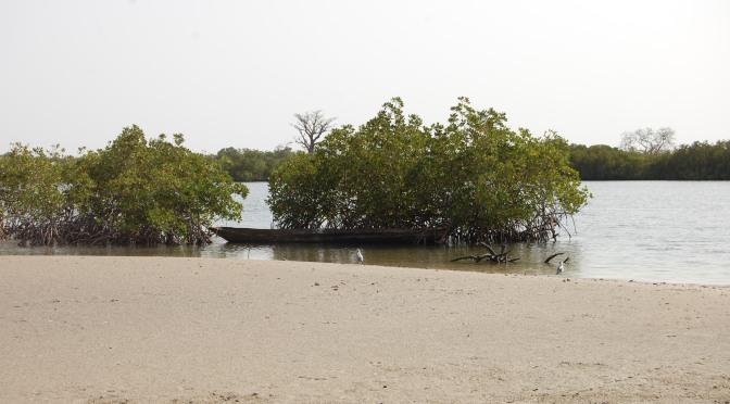 Mangroveträsk, naturens sätt att hjälpa sig själv