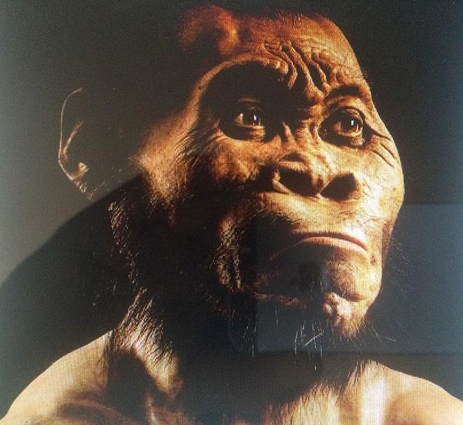 En ny människoart kan ha upptäckts i Sydafrika