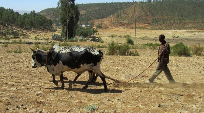 Etiopien riskerar en allvarlig humanitär svältkatastrof