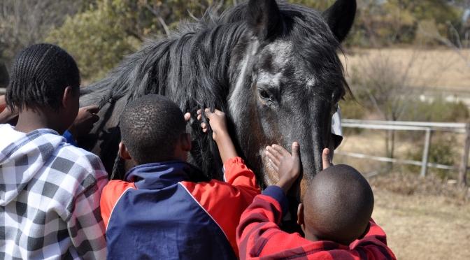 Hästar – En fristad för utsatta barn i Johannesburg