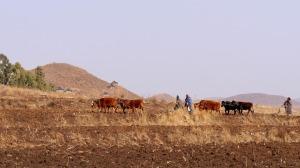 Jordbruk i torrt landskap, Lesotho - Bild: Pixabay