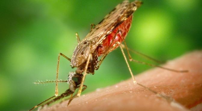 Stort malariautbrott i Kongo-Kinshasa