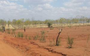 Här syns tydligt hur svårbrukbar den hårda, torra, röda jorden är. I bakgrunden syns Better Globes första plantage. År 2015 började företaget med en ny verksamhet. De anlitar bönder för att odla träd på sin mark. De får då inkomst av det, förutom att de kan odla grönsaker mellan träden vilket var nästan omöjligt att göra förut. Foto: Asta Norrman