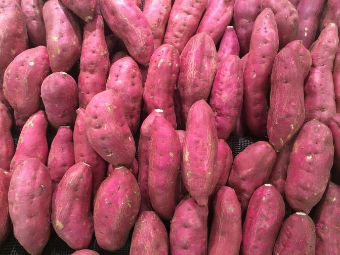 Kan sötpotatis lösa problemet med undernäring i subsahariska Afrika?